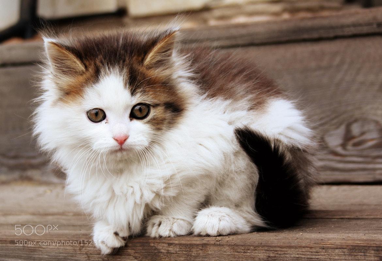 Photograph Kitten by Dmitry Epov on 500px