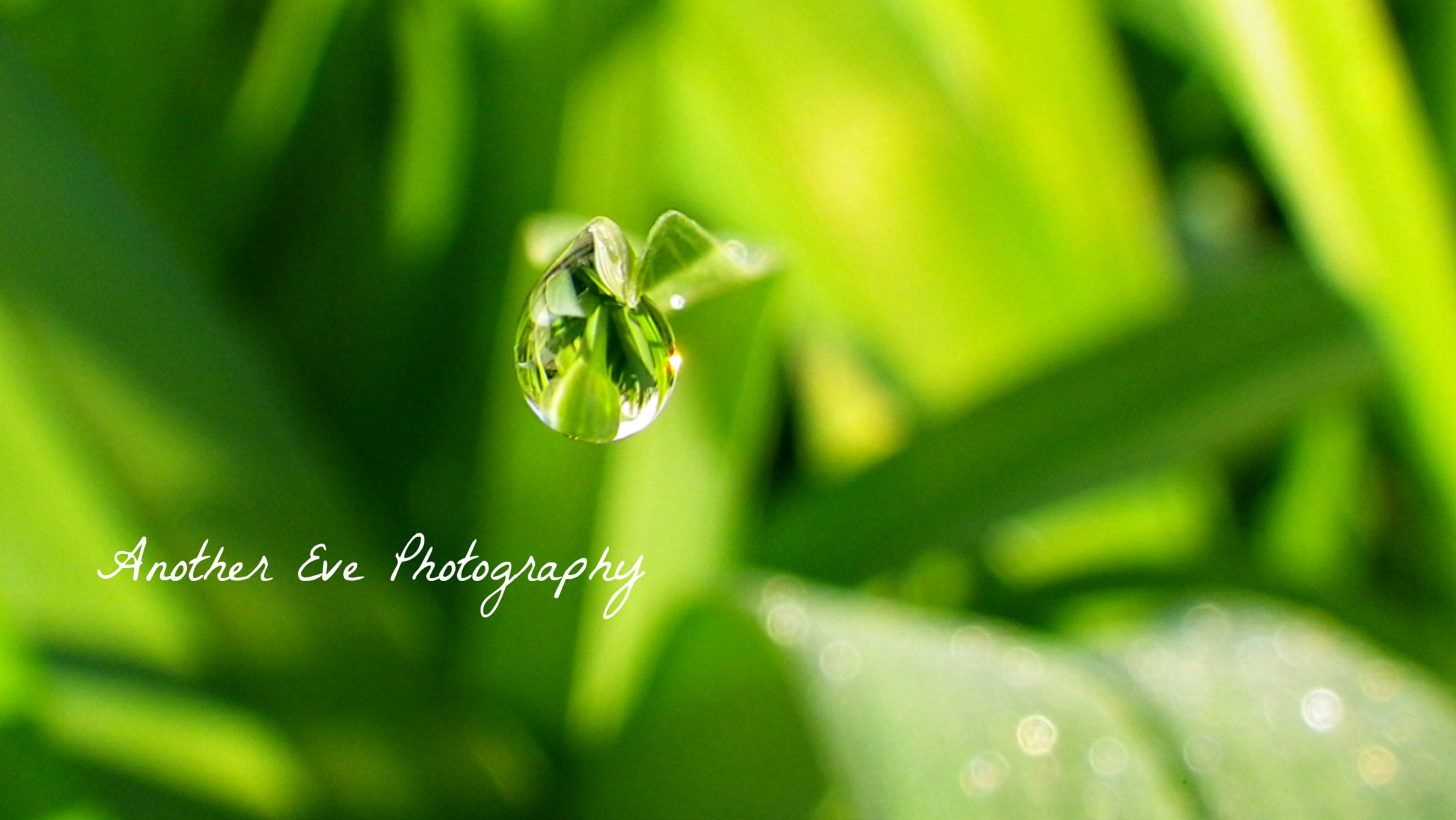 Photograph Morning drop by Tessi Storie on 500px