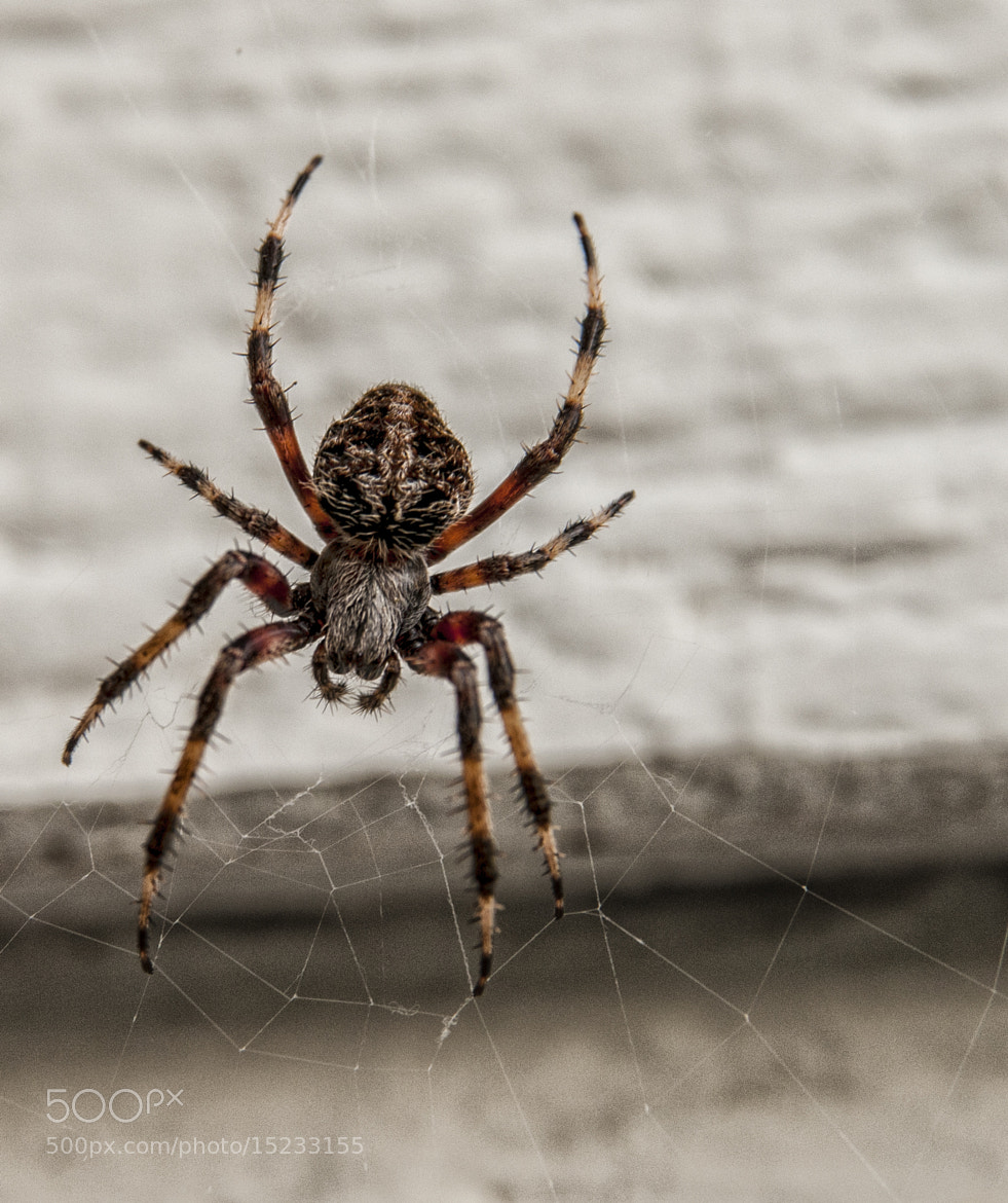 Photograph Porch Spider  by James McWhirter on 500px