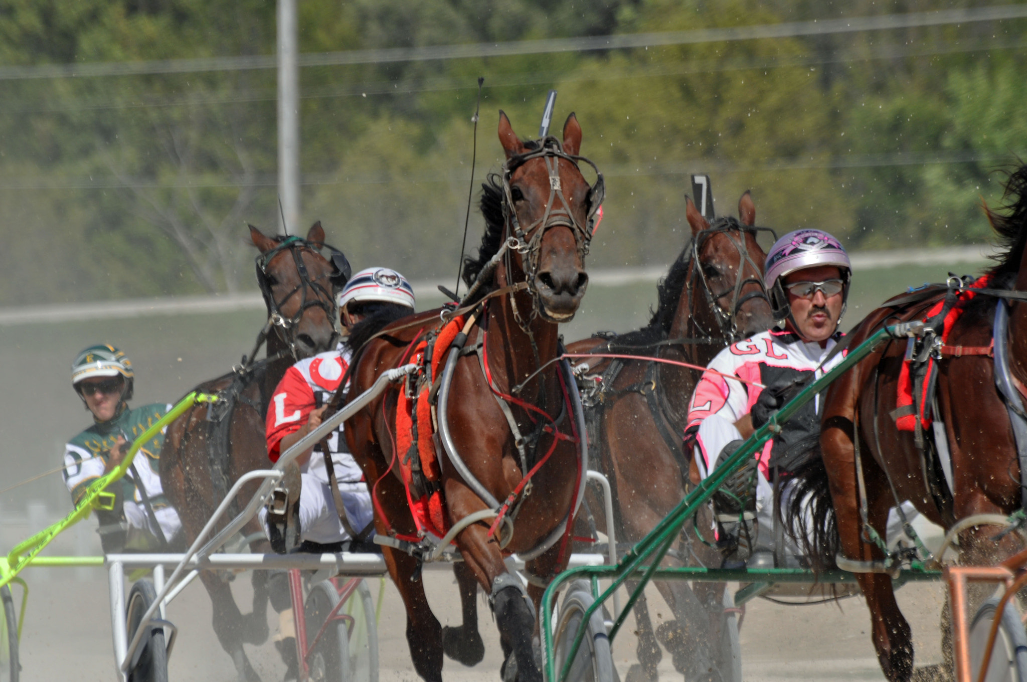Photograph Standardbred Racers by Karen King on 500px