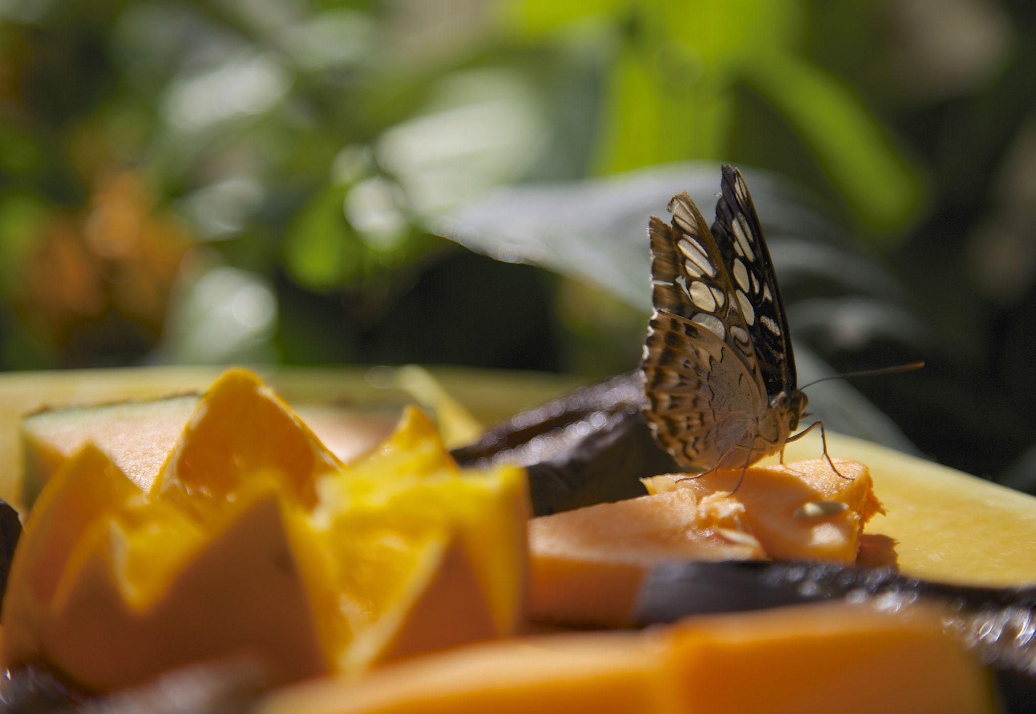 Photograph Fresh Fruit by Matthew Bailey on 500px