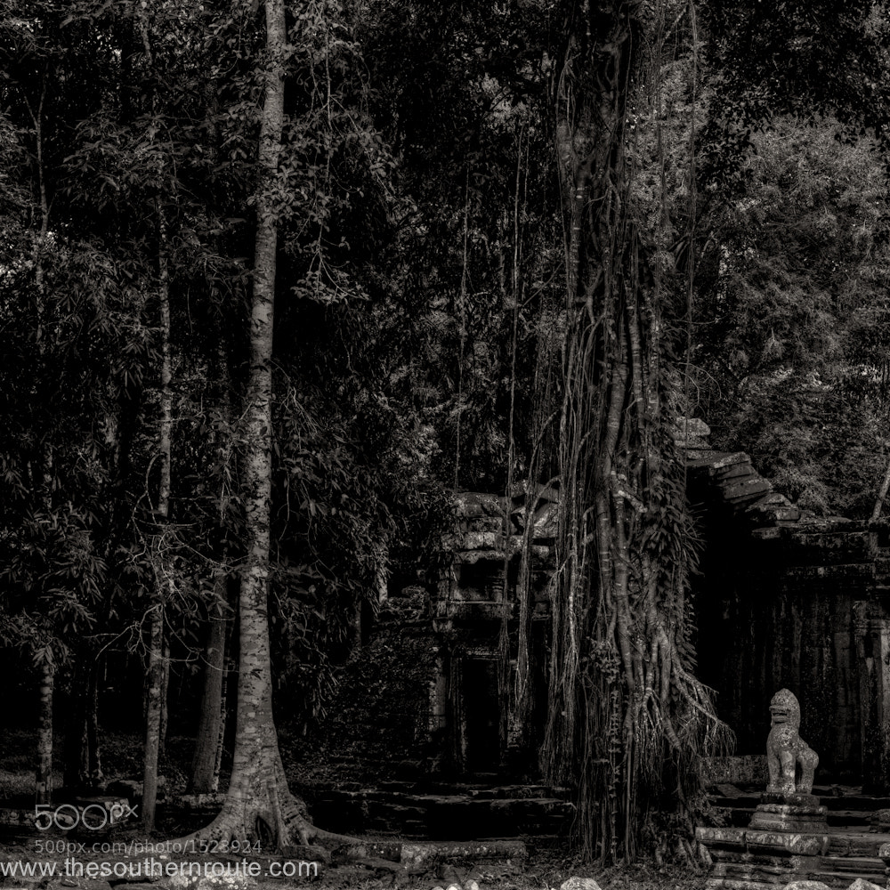 Photograph Black Angkor by regis boileau on 500px