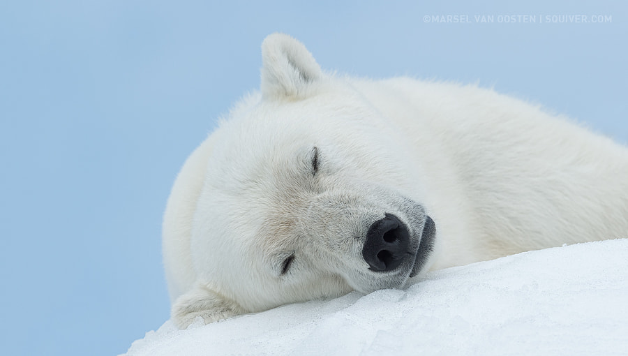 Sleeping Beauty by Marsel van Oosten on 500px.com