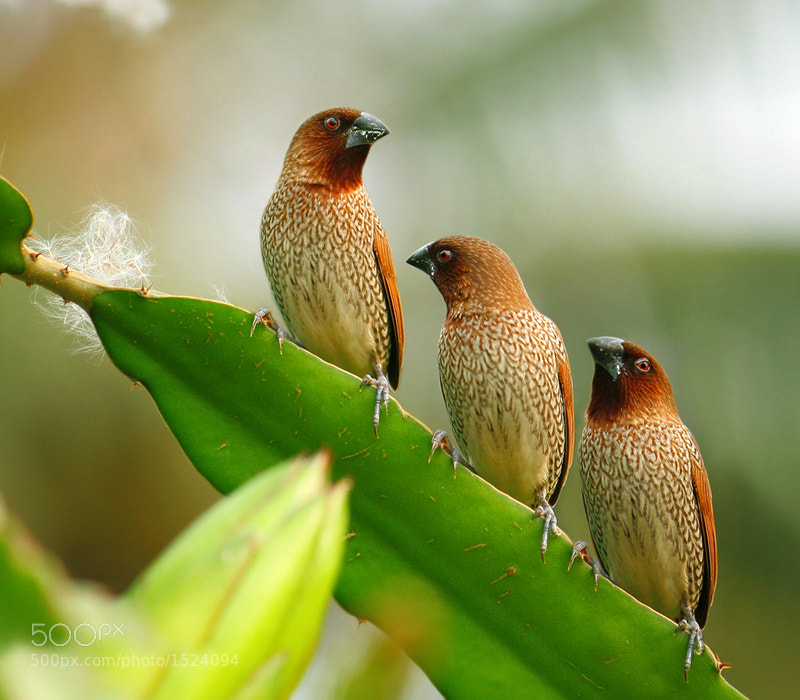 Photograph Trio by Prachit Punyapor on 500px