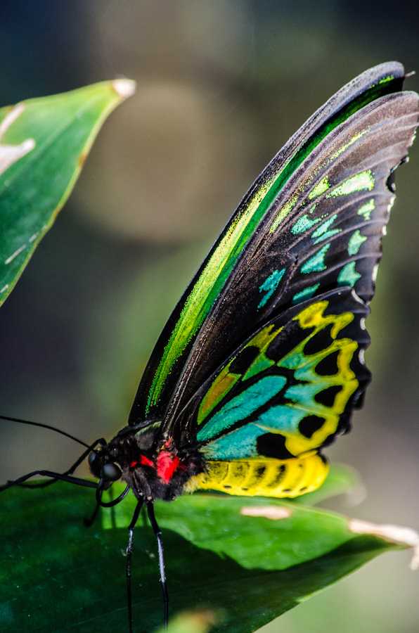Photograph Butterfly by James Eracleous on 500px