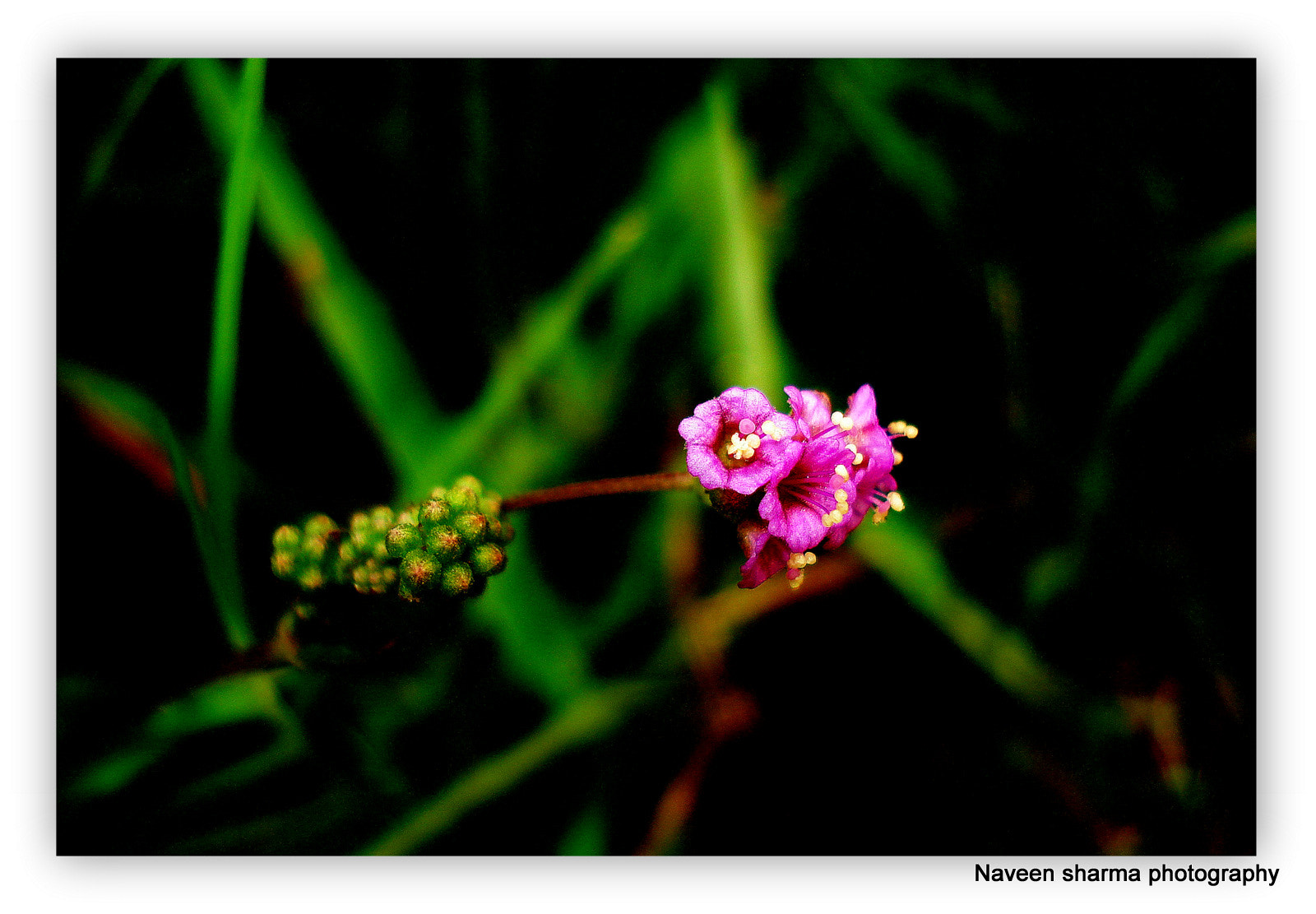 Photograph Mini beauty by naveen sharma on 500px