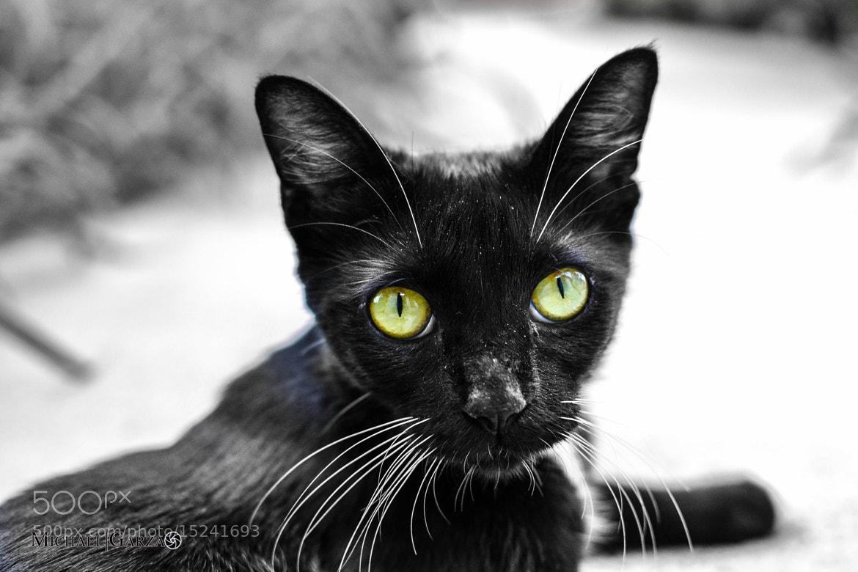 Photograph Rustles The Cat  by Ryan Garza on 500px