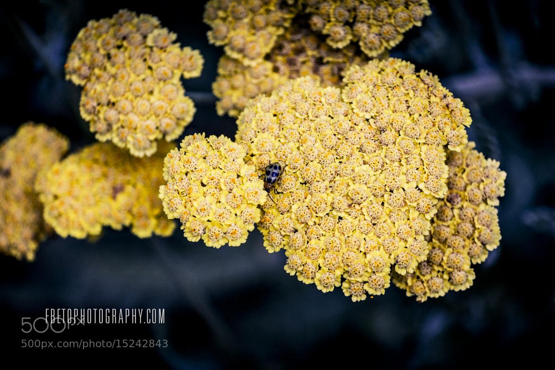 Photograph Bug & Flowers by Fernando De Oliveira on 500px
