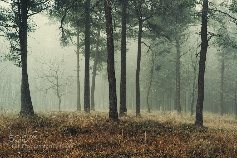 Photograph Colder Days by J-W v. E. on 500px