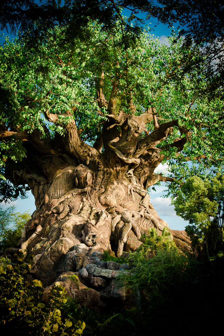 Photograph Tree of Life by Mike Kremer on 500px