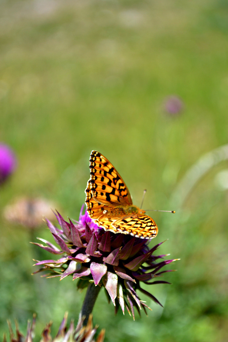 Photograph Butterfly! by Dylan Buckland on 500px
