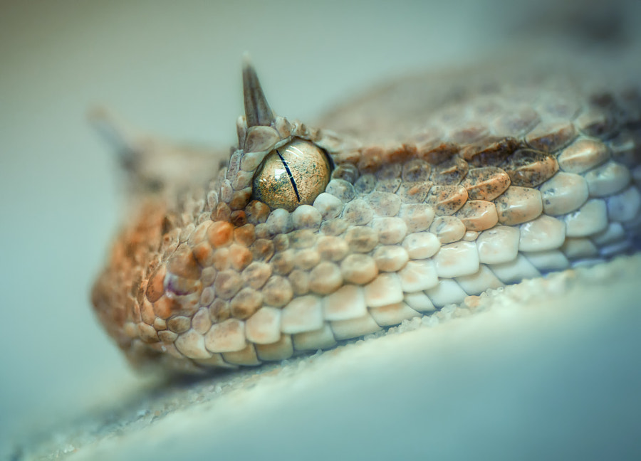 25 Terrifying Ly Awesome Snake Portraits 500px