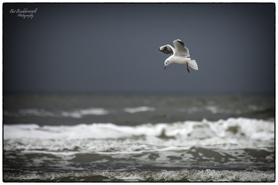 Photograph I can fly ! by Kai Buddensiek on 500px