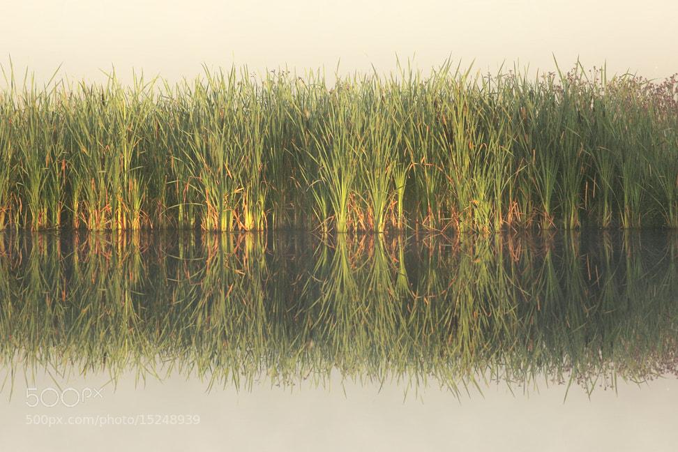 Photograph Golden Reflection by Kilian Schönberger on 500px