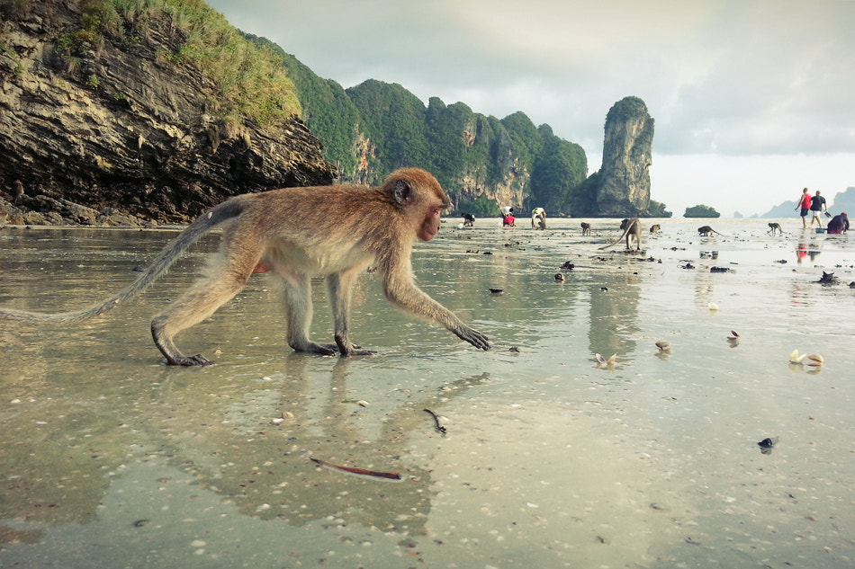 Photograph Monkey Business  by Shay Sapir on 500px