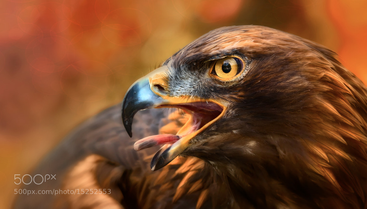 Photograph call of the eagle by Sonja Probst on 500px