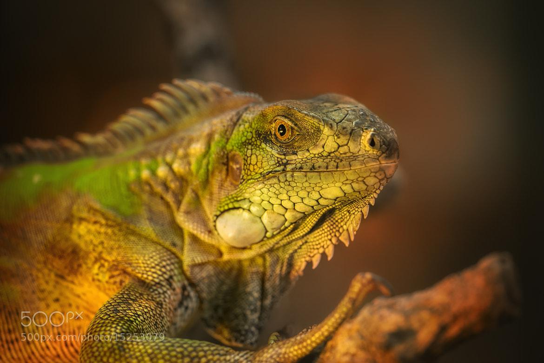 Photograph lizard no. 2 by Detlef Knapp on 500px