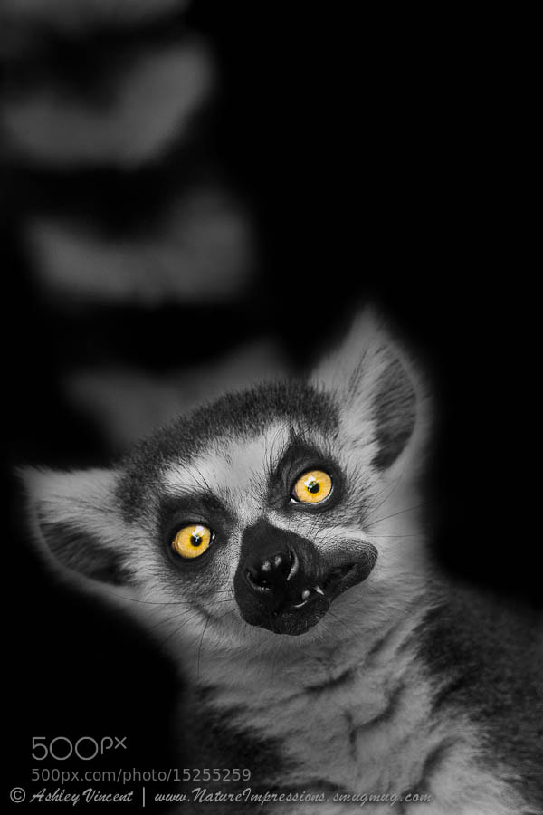 Photograph The Munch! by Ashley Vincent on 500px