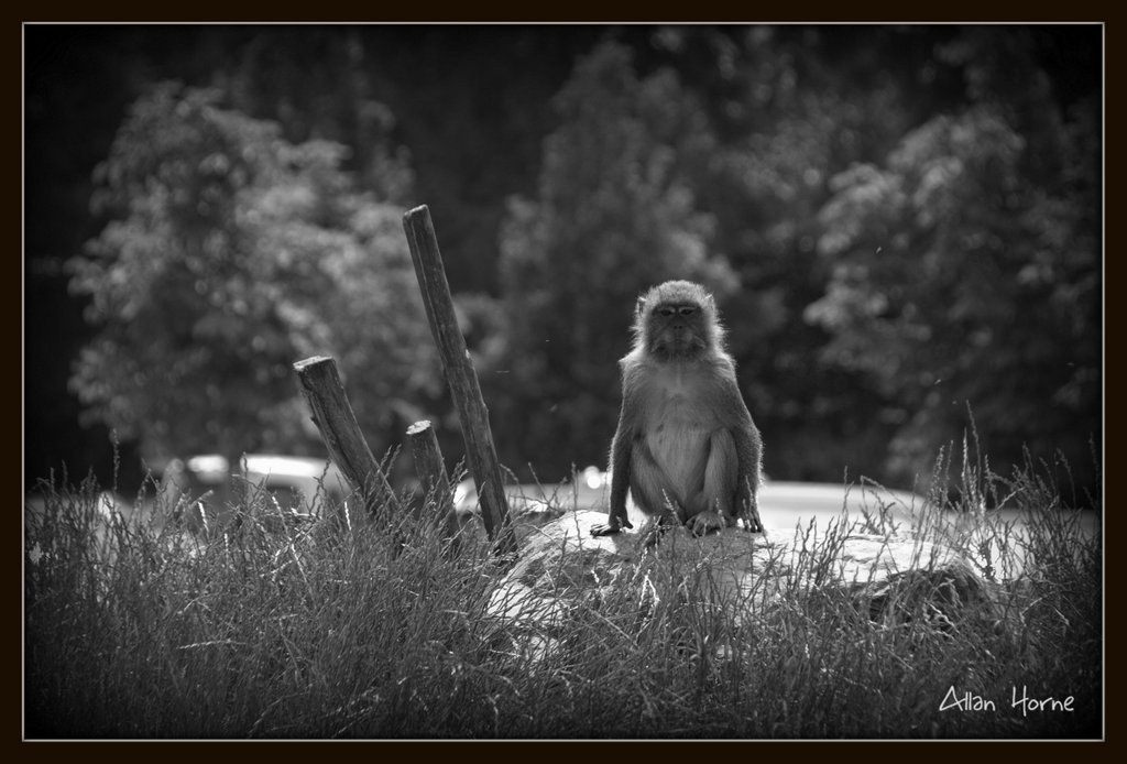 Photograph Monkey Guard by Allan Horne on 500px