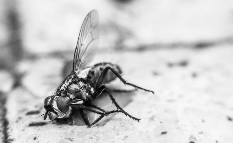 Photograph Raid-Fly by Nahuel Solis on 500px