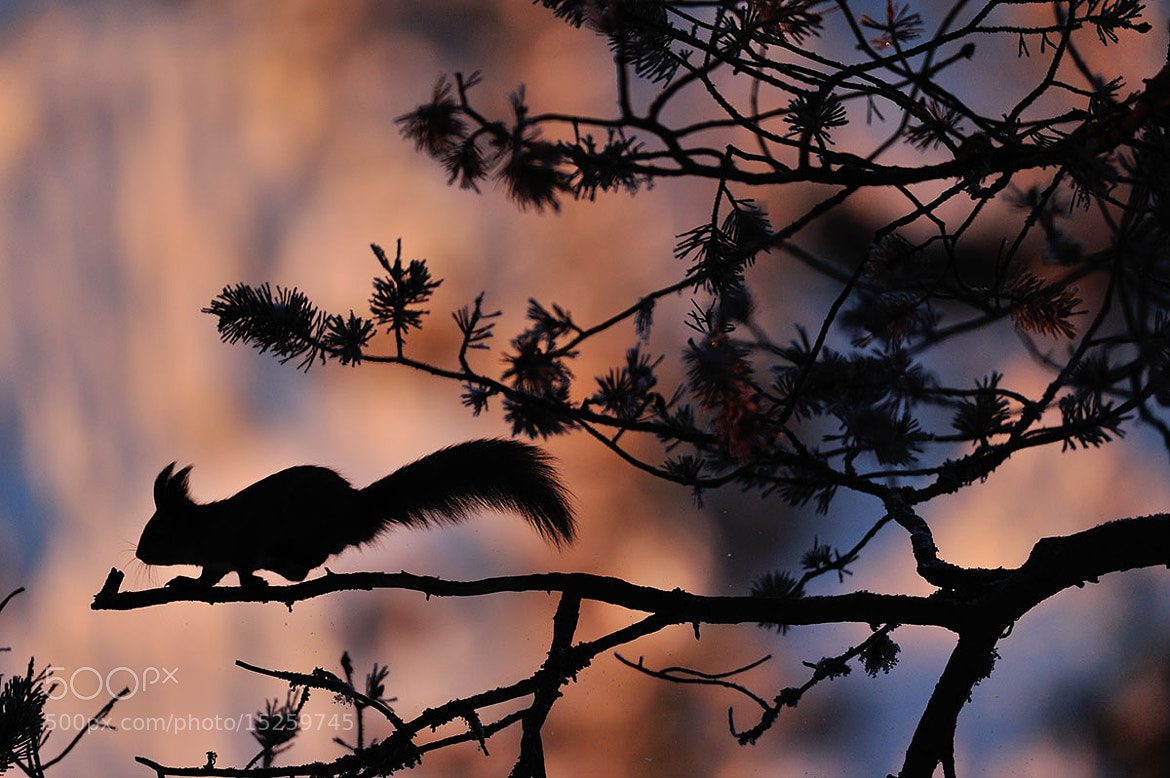 Photograph Running Squirrel  by Yves Adams on 500px