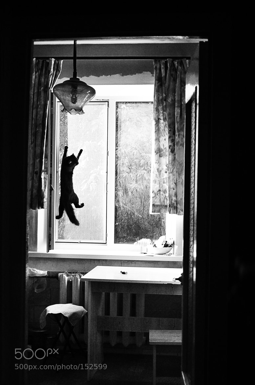 Photograph catching flyes by Irina Ivanova on 500px