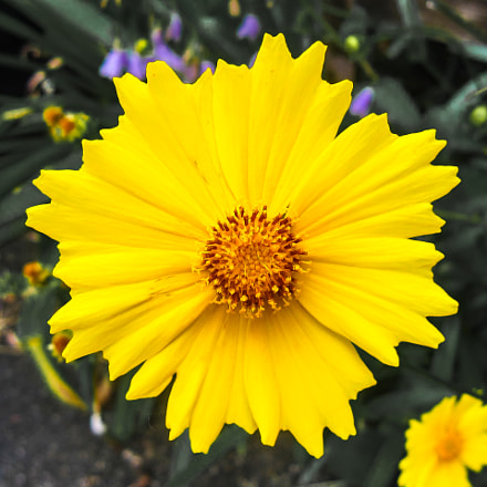 Yellow Flower, Canon POWERSHOT SD880 IS