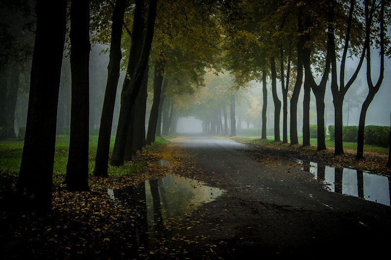"Photograph ""Morning fog"" by Lada Jermolajeva on 500px"