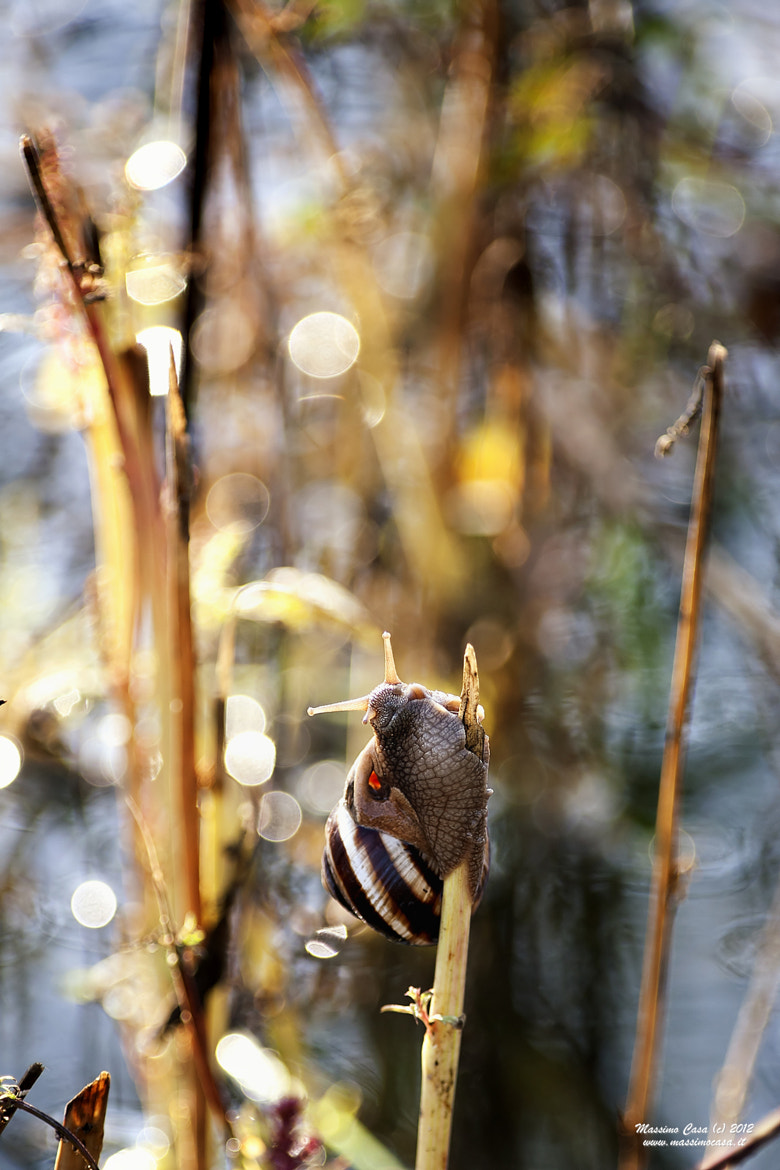 Photograph Snail & Bokeh by Massimo Casa on 500px