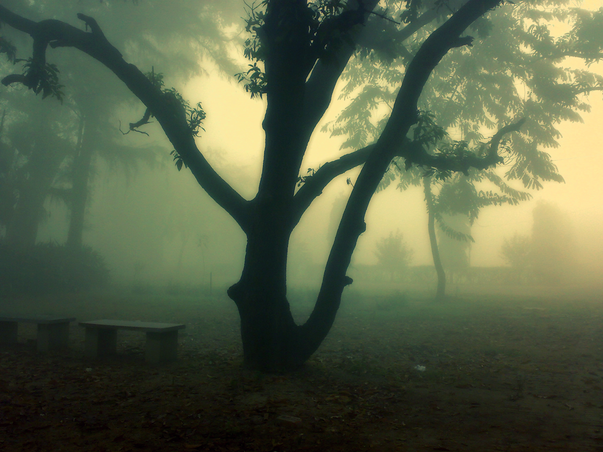 Photograph A Foggy Morning by Rafid Suhail on 500px
