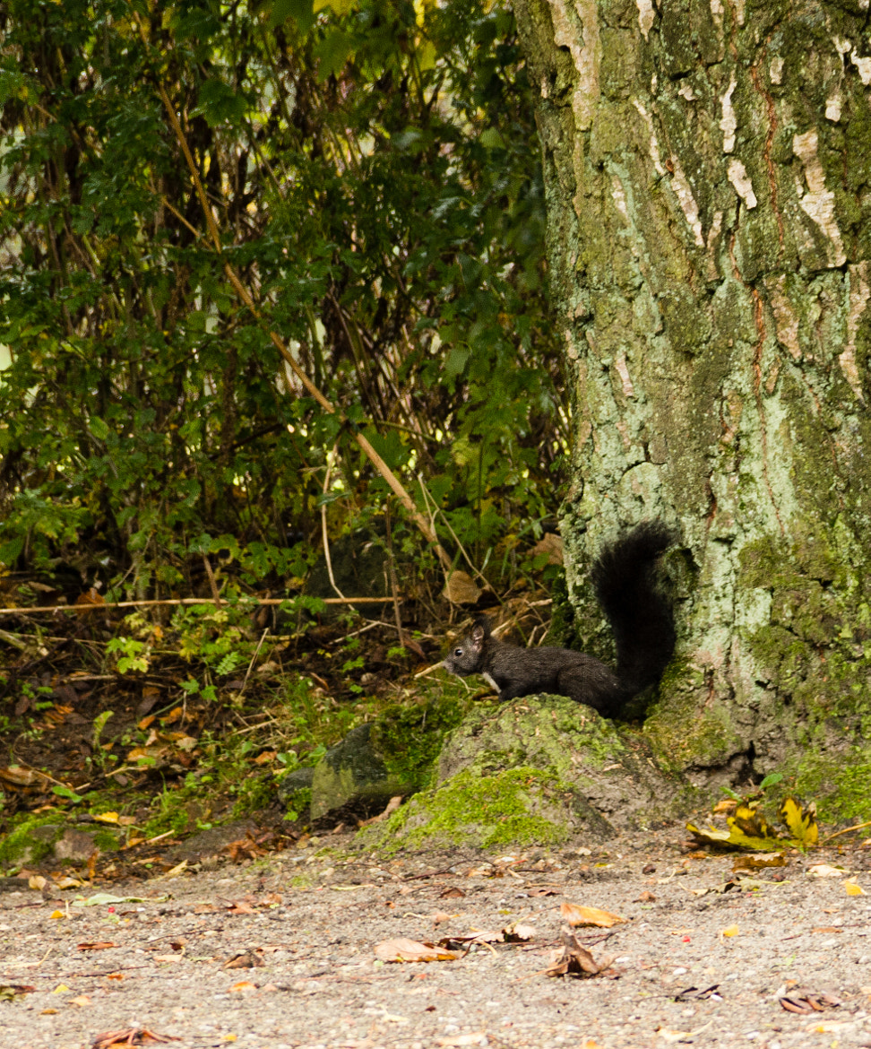 Photograph That little fellow has nuts.. by Lasse Hjort on 500px