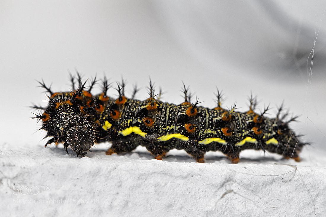 Photograph Caterpillar by Kayman Studio on 500px