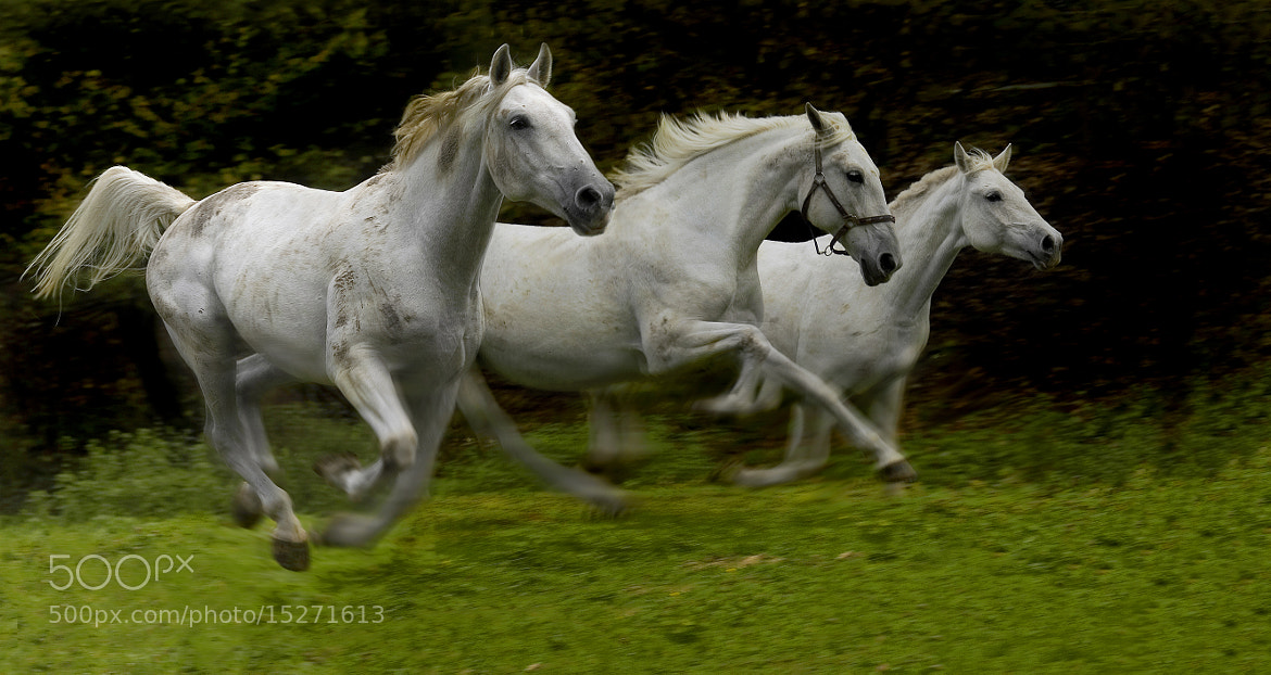Photograph flow of spirit by Milan Malovrh on 500px