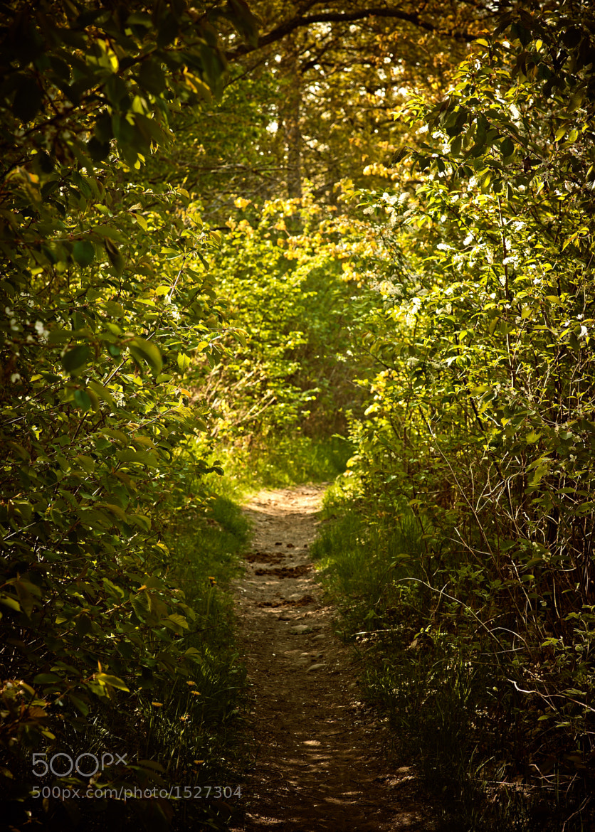 Photograph Sunny path by Kristoffer Håkansson on 500px