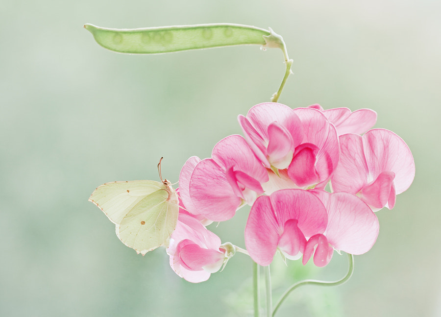 Photograph Sweet pea and little friend by Magda Wasiczek on 500px