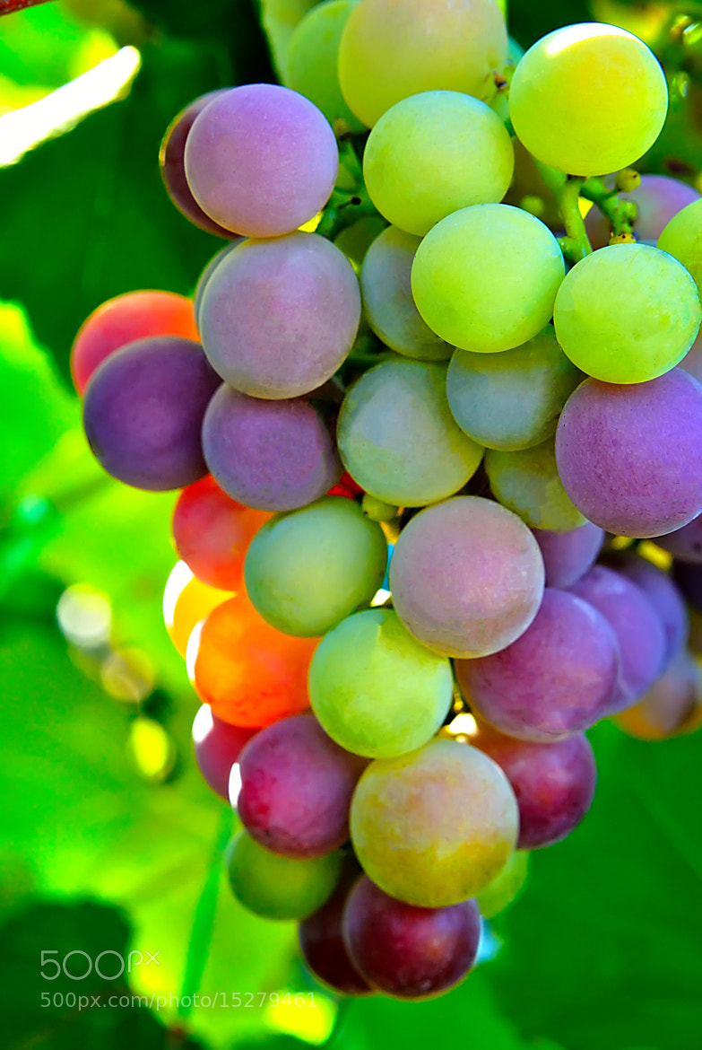 Photograph Colorful bunch of grapes by Andriy Zoma on 500px