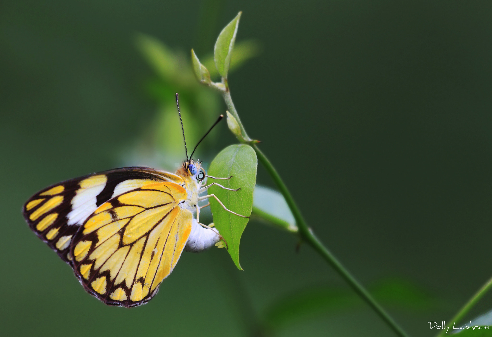 Photograph Butterfly, Nature, Green by Dolly Bhardwaj on 500px