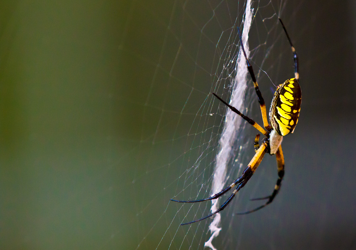 Photograph My Lovely Spider by Jason Busby on 500px
