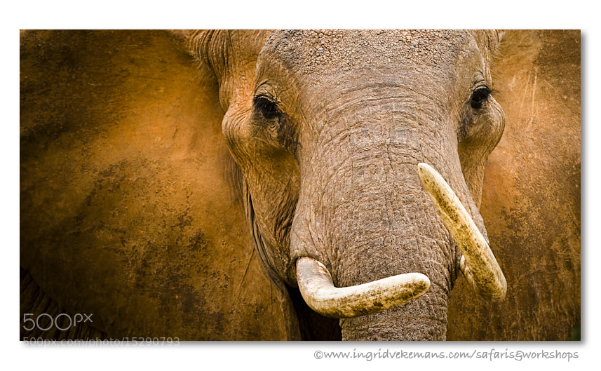 Photograph Matriarch by Ingrid Vekemans on 500px
