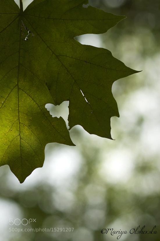 Photograph The Butterfly Omen by Mariya Olshevska on 500px