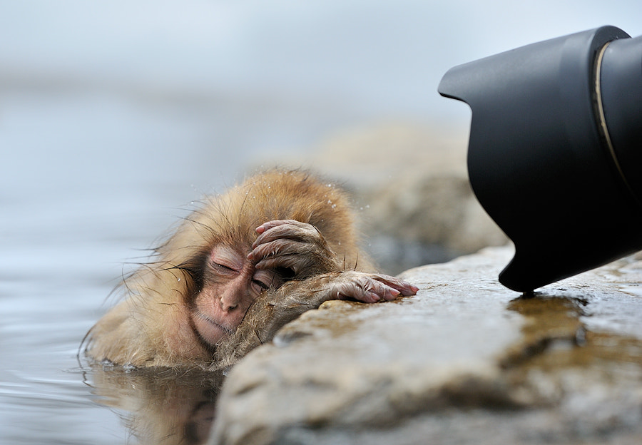 Photograph Oh no, not again! by Marsel van Oosten on 500px