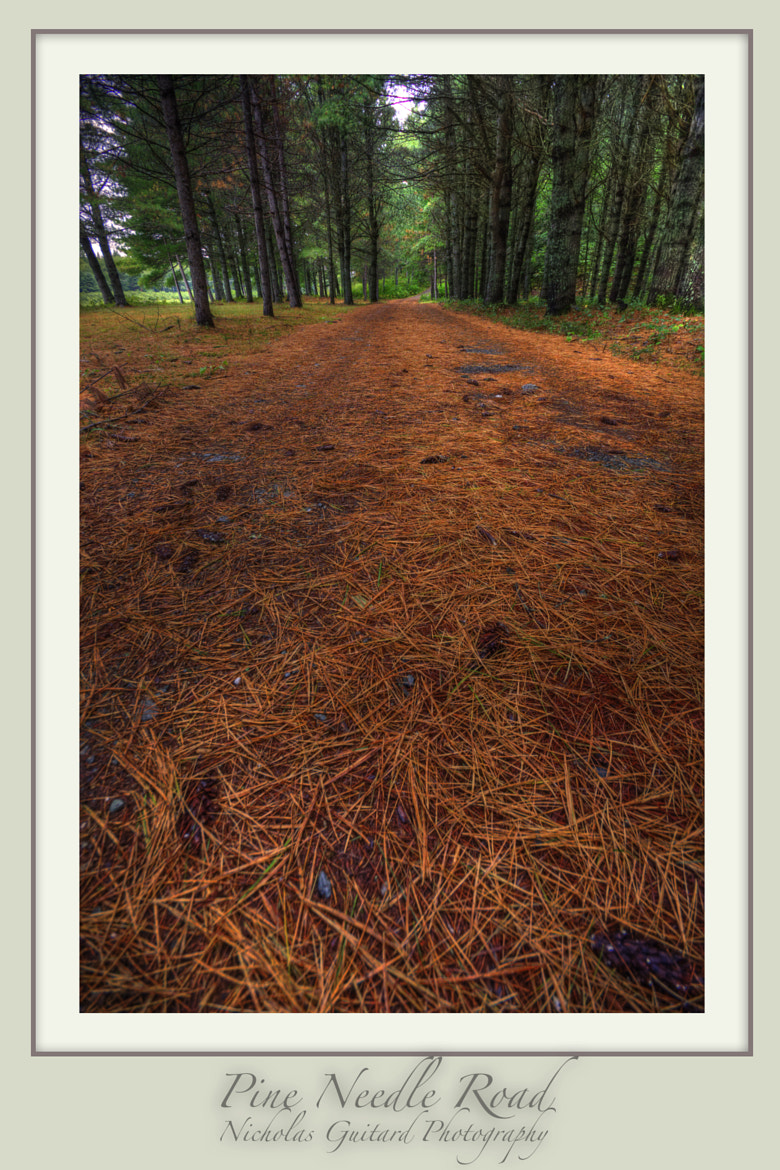 Photograph Pine Needle Road by Nicholas Guitard on 500px
