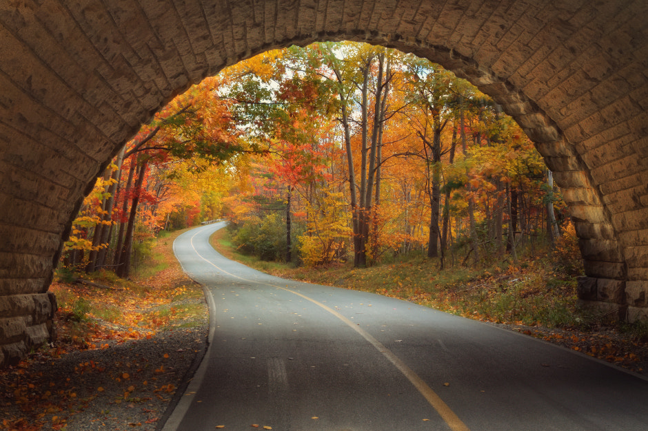 Photograph Autumn Tunnel Vision by Vincent James on 500px
