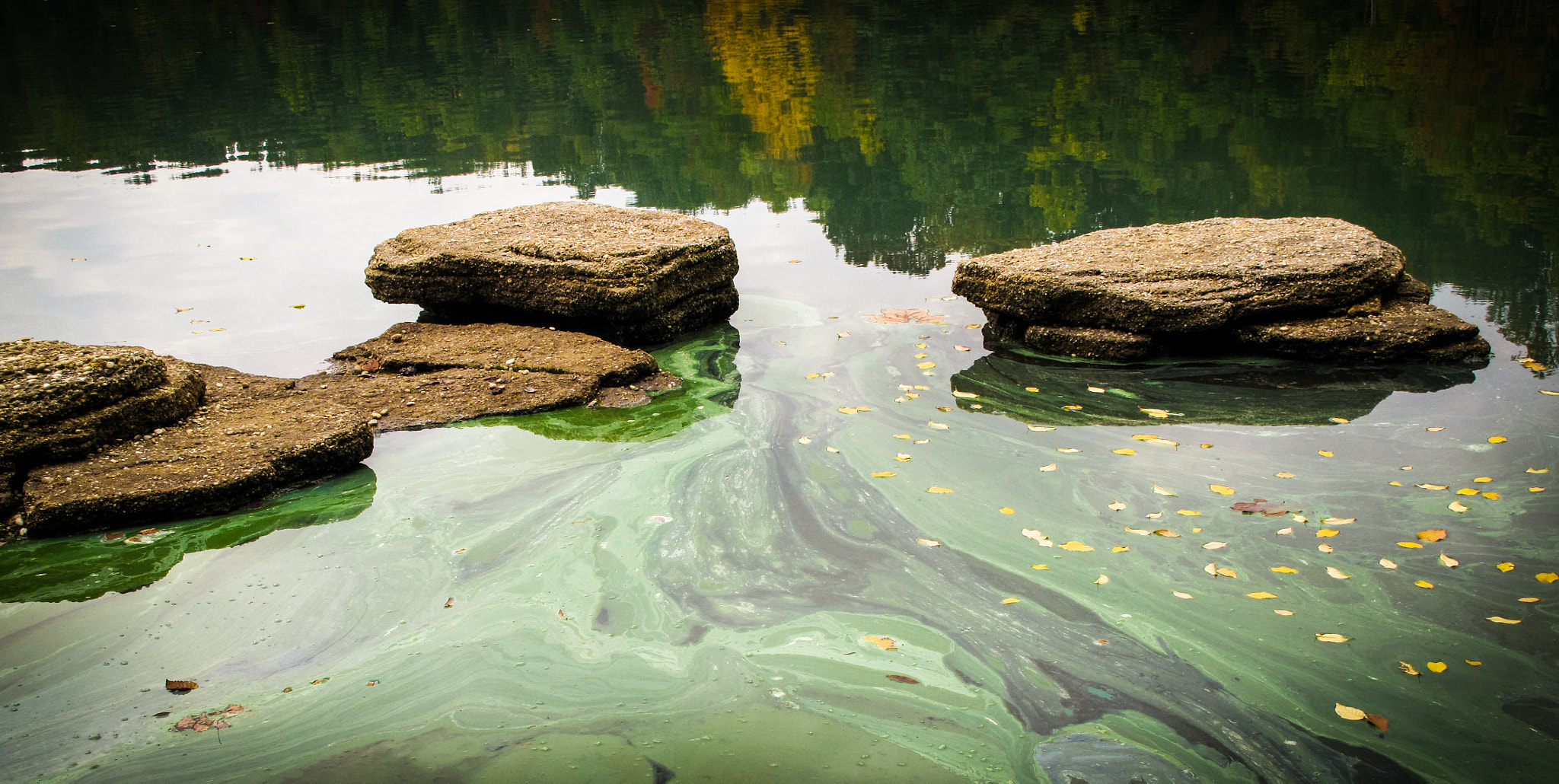 Photograph Green Slime by Scott T.  Morrison on 500px
