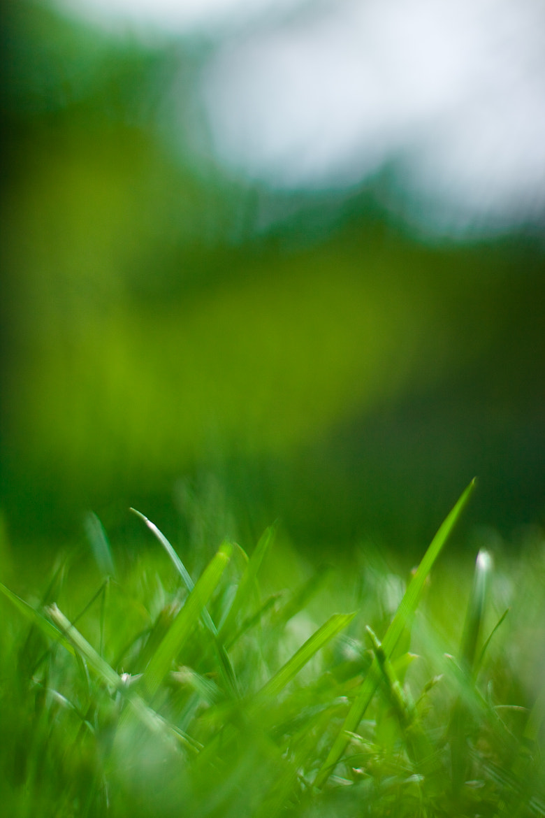 Photograph Green Grass by Rob Lilley on 500px