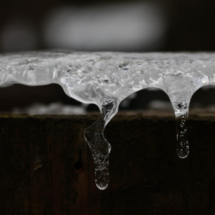 Ice formed over fence, Canon EOS REBEL T3, Canon EF 50mm f/2.5 Macro