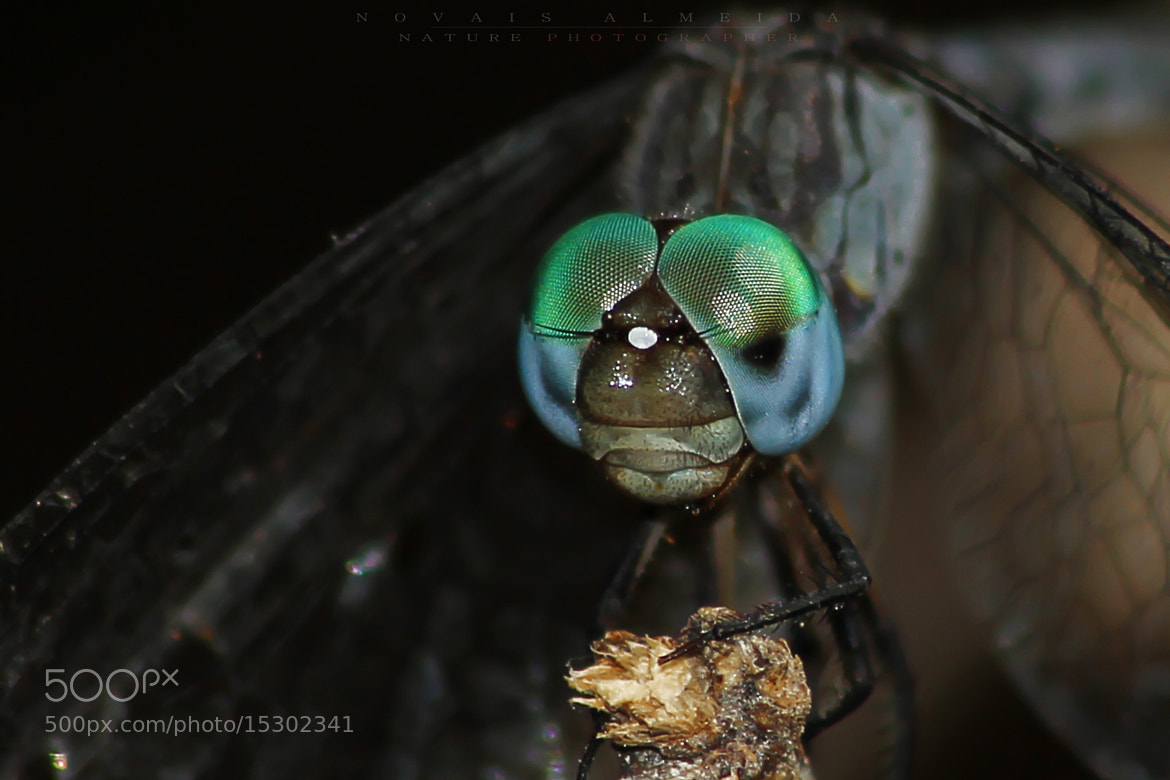 Photograph Dragon-fly - Libélula by Novais Almeida on 500px