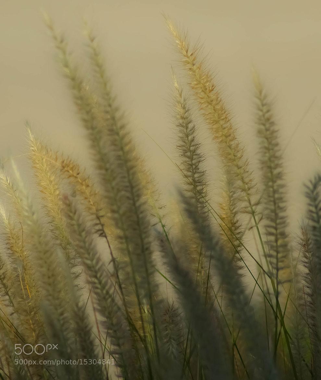 Photograph Grass by julian john on 500px
