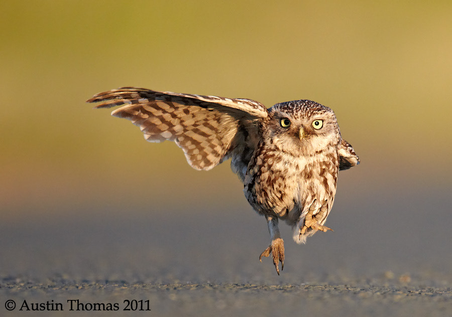 Photograph He went that way... by Austin Thomas on 500px