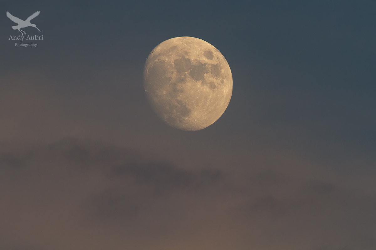 Photograph Moon Above by Andy Aubri on 500px